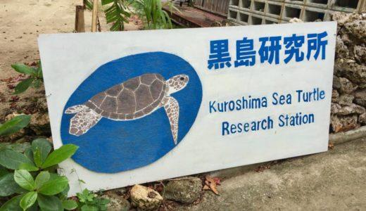 黒島研究所に行ってきた感想・レビュー【ヤシガニ・ウミガメが間近で見られる】