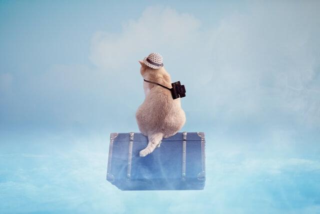 麦わら帽子で旅する猫